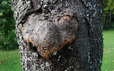 Trojno srce